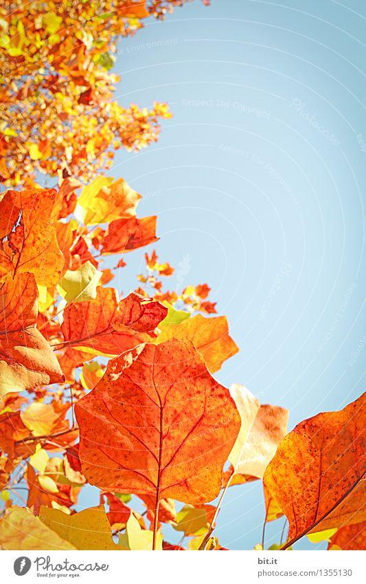 Herbstkurve Himmel Natur Ferien & Urlaub & Reisen Pflanze blau Baum ruhig Wald Wärme Herbst Garten Zeit orange Park Dekoration & Verzierung Schönes Wetter