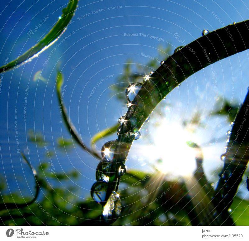 sonnenzeit nass Baum Blatt frisch Sonnenstrahlen Himmelskörper & Weltall schön Sommer Wassertropfen Regen Seil Spieglung jarts Natur blau Erfrischung