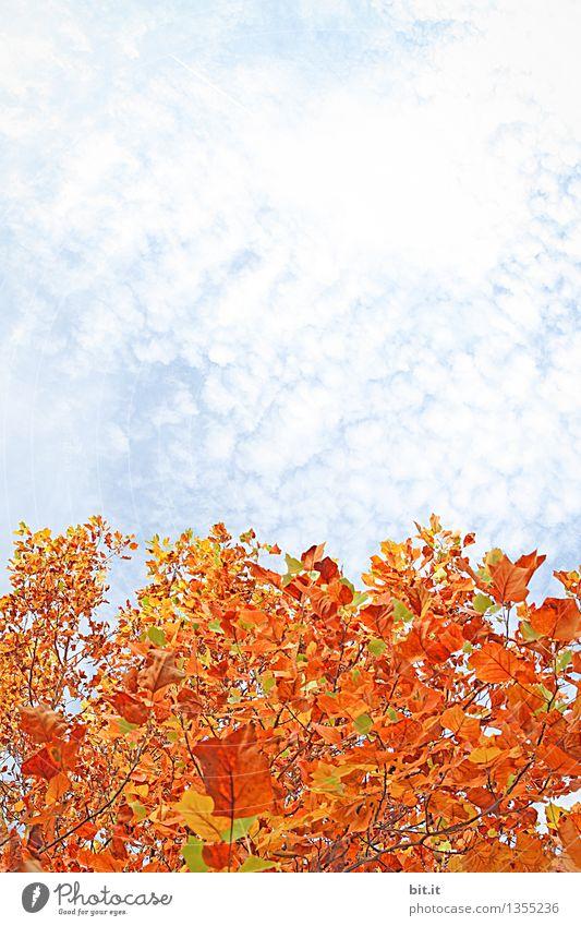 Schäfchenwolken auf Herbst... Himmel Natur Pflanze Wolken Wald Park Wandel & Veränderung Jahreszeiten Herbstlaub herbstlich Herbstfärbung Zweige u. Äste
