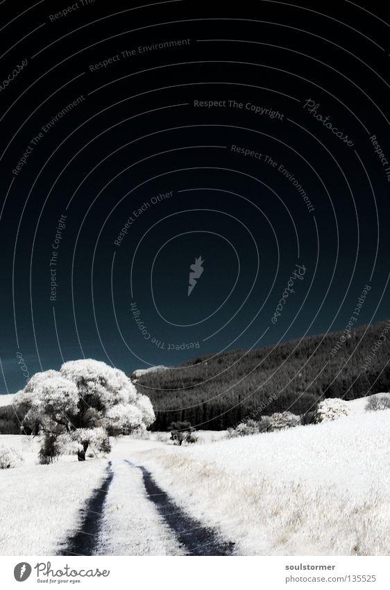 langer Weg ins Dunkel Natur blau weiß Baum Wolken Einsamkeit schwarz Wald dunkel Wege & Pfade Traurigkeit Angst Sträucher Schmerz Langeweile Surrealismus