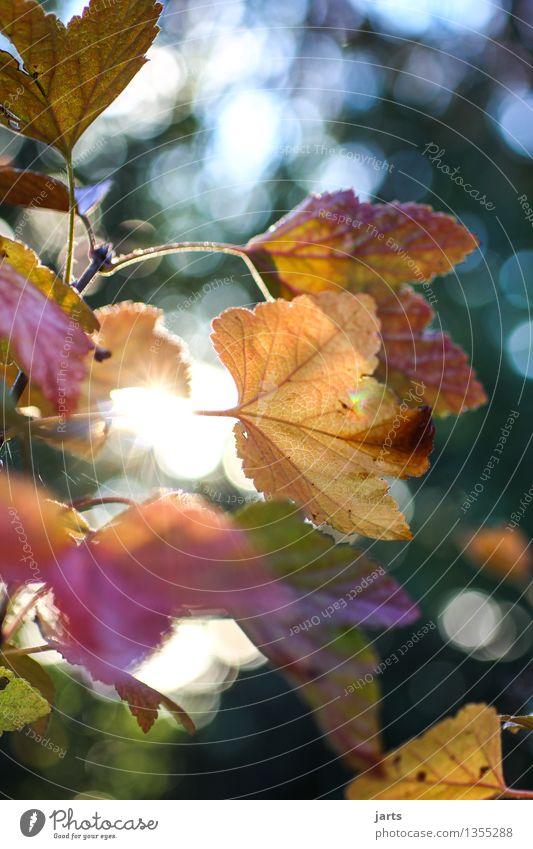 herbstfarben Natur Pflanze schön Baum Blatt Wald Herbst natürlich hell glänzend frisch Schönes Wetter
