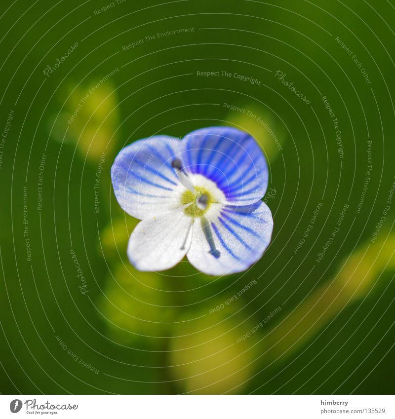 hopeless lost Natur Pflanze schön Farbe Sommer weiß Blume rot Blüte Frühling Hintergrundbild Wachstum frisch Vergänglichkeit Hoffnung Trauer