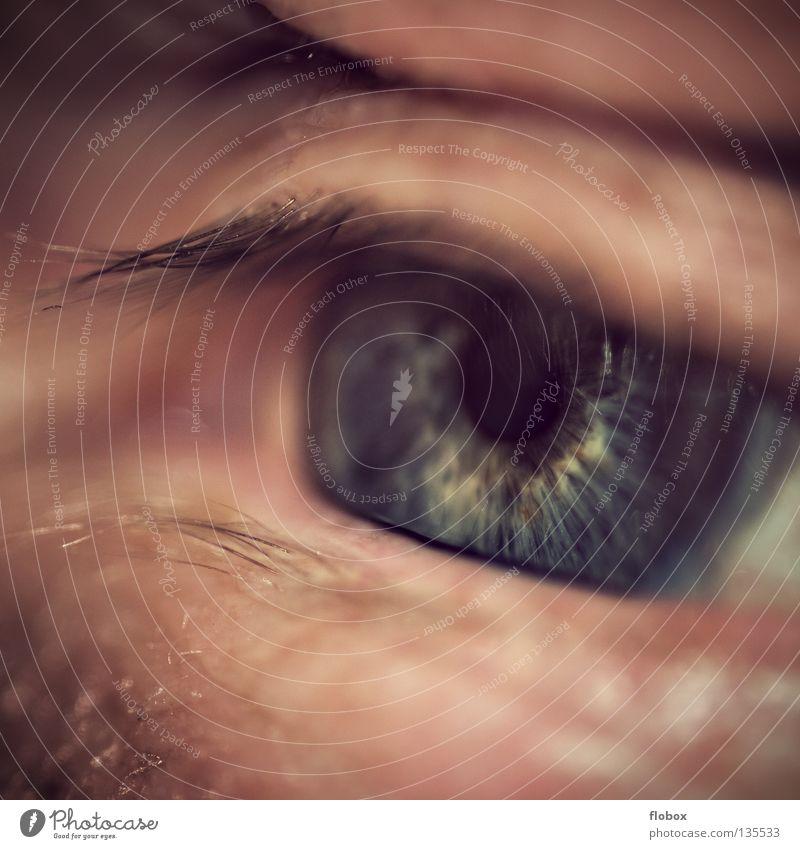 Body Parts 0 Reloaded Pupille Wimpern Mensch Sinnesorgane Mann Trauer maskulin Angst Panik Verzweiflung Auge Regenbogenhaut Linse Müdigkeit schläfrig Haut Falte