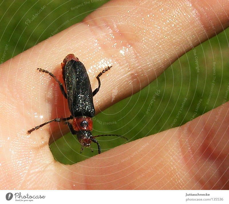 Gerettet Sommer nass Finger Hilfsbereitschaft Insekt Käfer krabbeln trocknen Sanitäter