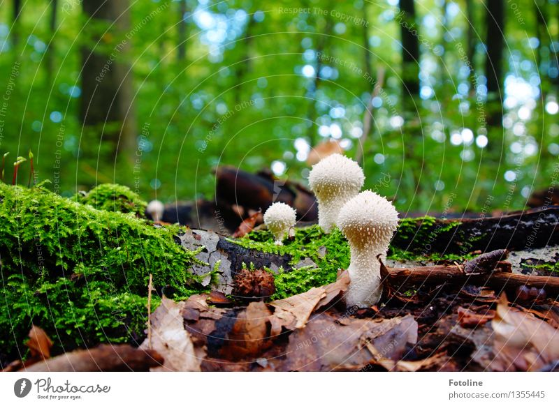 Aliens Natur Pflanze grün Baum Landschaft Blatt Wald Umwelt Wärme Herbst natürlich hell Schönes Wetter Pilz Moos Herbstlaub