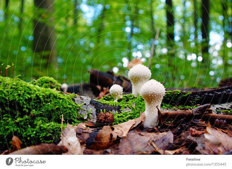 Aliens Umwelt Natur Landschaft Pflanze Herbst Schönes Wetter Baum Moos Wald hell natürlich Wärme grün Pilz Herbstlaub Blatt Farbfoto mehrfarbig Außenaufnahme