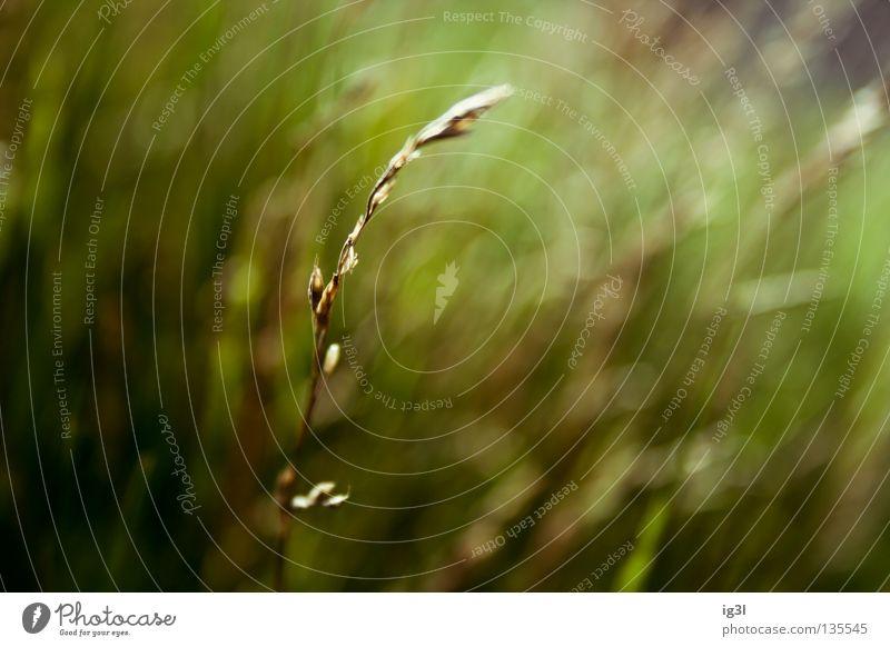 grün. Natur Ferien & Urlaub & Reisen Pflanze Sommer Erholung ruhig Tier dunkel Umwelt Leben Frühling Wiese Gras Linie hell