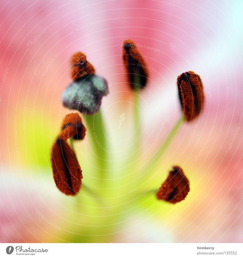 intimgebiete Natur Pflanze schön Farbe weiß Sommer rot Blume Frühling Blüte Hintergrundbild Wachstum frisch Vergänglichkeit Hoffnung planen