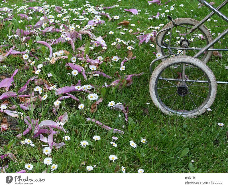 kiwa im grünen ruhig Wiese Frühling Luft Kindheit Gänseblümchen Mittagsschlaf Kinderwagen