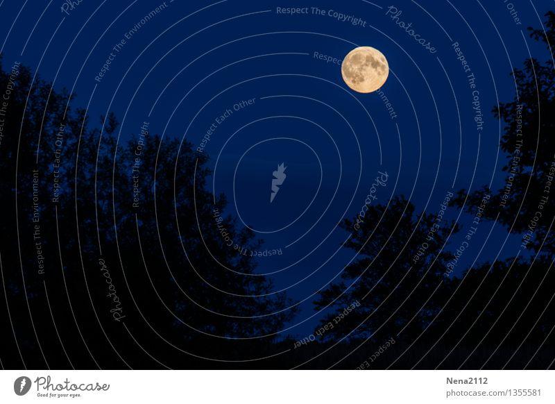 Vollmond Umwelt Natur Landschaft Luft Himmel Wolkenloser Himmel Nachthimmel Mond Sommer Klima Schönes Wetter Baum Garten Park Wald authentisch bedrohlich dunkel