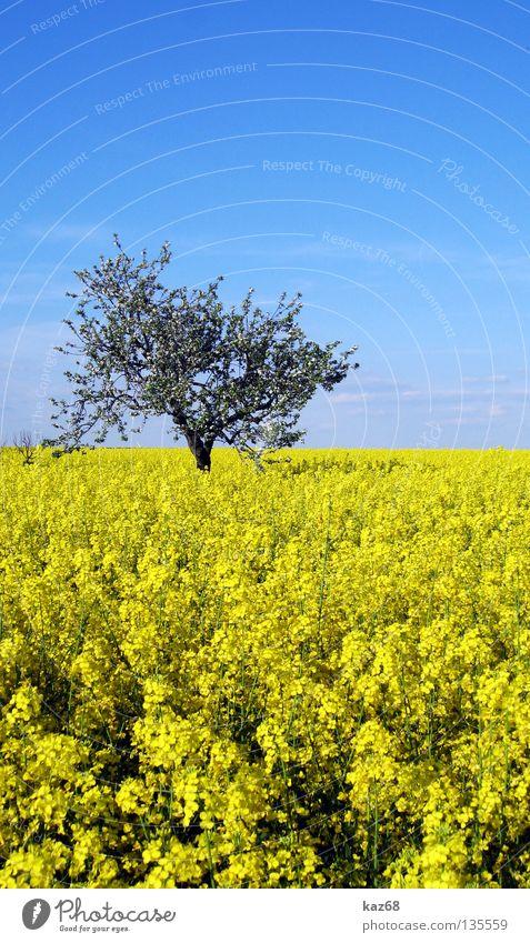 blau gelb Himmel blau Ferien & Urlaub & Reisen Baum Pflanze Sommer Blatt Einsamkeit Wolken Ferne Landschaft gelb Wärme Frühling Freiheit Luft