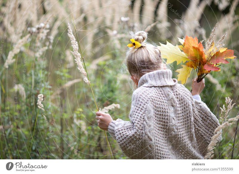 Herbstschätze sammeln Mensch feminin Kind Mädchen Kindheit 1 3-8 Jahre Umwelt Natur Pflanze Gras Blatt Wald entdecken festhalten Blick wandern Freundlichkeit