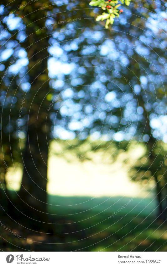 Herbstdisco Umwelt Natur Landschaft Pflanze Baum Wiese Feld Wald Gefühle grün blau Kreis Baumstamm Blatt sehschwäche Blick Spaziergang Sehvermögen Farbfoto