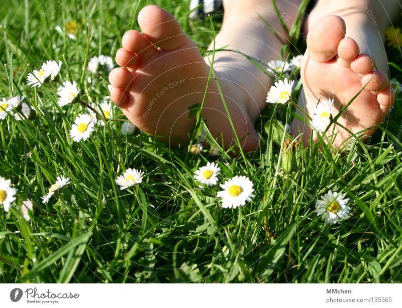 umgefallen Gras Wiese Feld mehrfarbig Sommer Blume Gänseblümchen Stengel Halm Erholung ruhen schlafen Sonnenbad Zehen Fußsohle Barfuß Wellness Pflanze Vorgarten