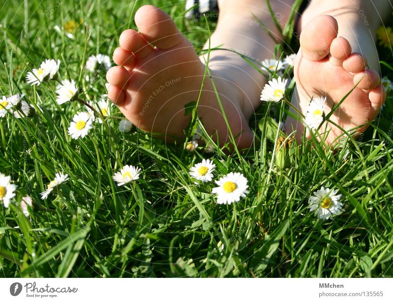 umgefallen Natur Blume Pflanze Sommer Erholung Wiese Gras Frühling Fuß Feld schlafen Wellness Rasen liegen Stengel Müdigkeit