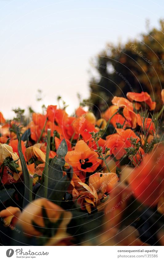 laga park... Blume Sommer Park orange Blühend