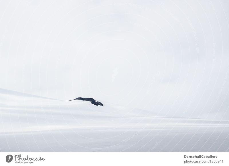 kalt l schneebedeckt Ferien & Urlaub & Reisen Tourismus Winter Schnee Winterurlaub Berge u. Gebirge wandern Landschaft Eis Frost Schneefall Hügel Felsen Alpen