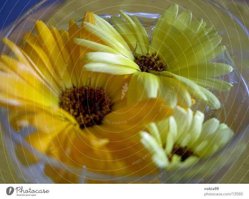 Natur im Glas Wasser Leben kommen