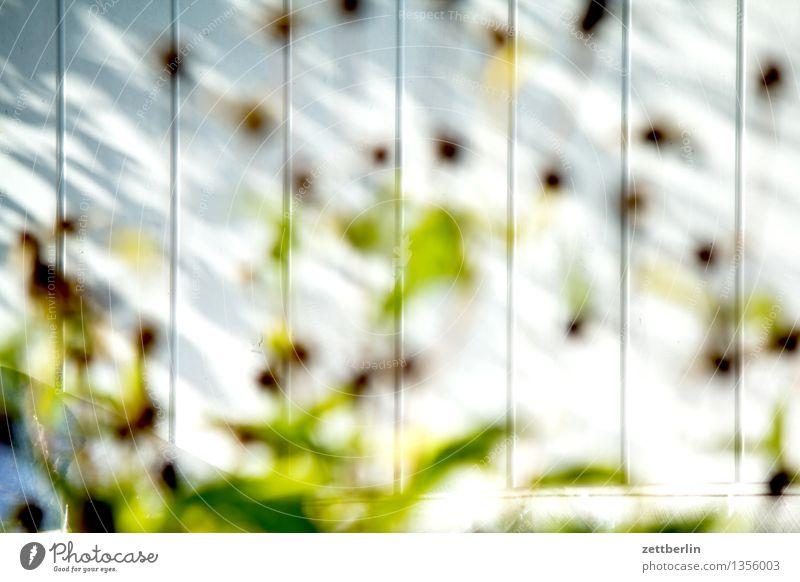 Blumen (unscharf) Blüte Stauden Blütenstauden Blatt Stengel grün verblüht Herbst Sommer Sonne Licht Garten Schrebergarten Kleingartenkolonie Scheune