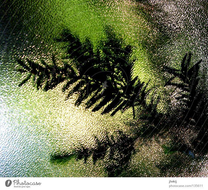 Durchblick Natur Baum Pflanze dunkel Fenster hell Glas Ast Tanne verfallen Fensterscheibe Zweig Nadelbaum Tannennadel Eibe