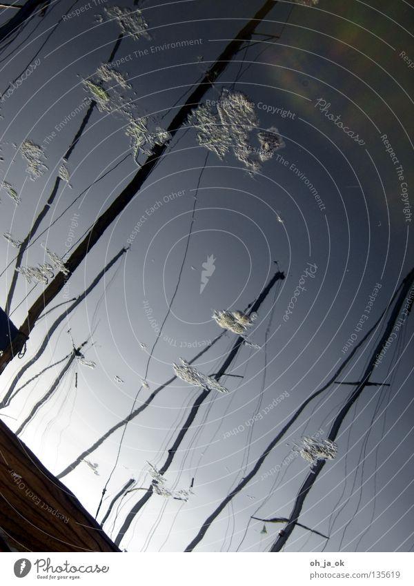 heimathafen Segeln Wasserfahrzeug Spiegel Licht Verlauf weiß dunkel Anlegestelle Oberfläche Wanten Steg Algen Wassersport Hafen flaute Himmel Abend Strommast