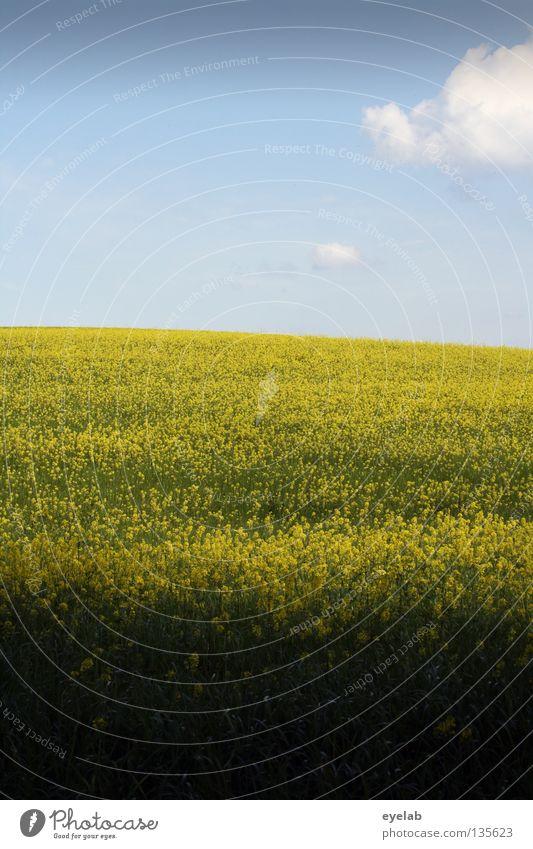 Rapsodie in gelb (3. Akt) Himmel blau Pflanze Sommer Ferien & Urlaub & Reisen Wolken gelb Ferne Frühling Freiheit Landschaft Luft Feld Wetter Horizont Wachstum