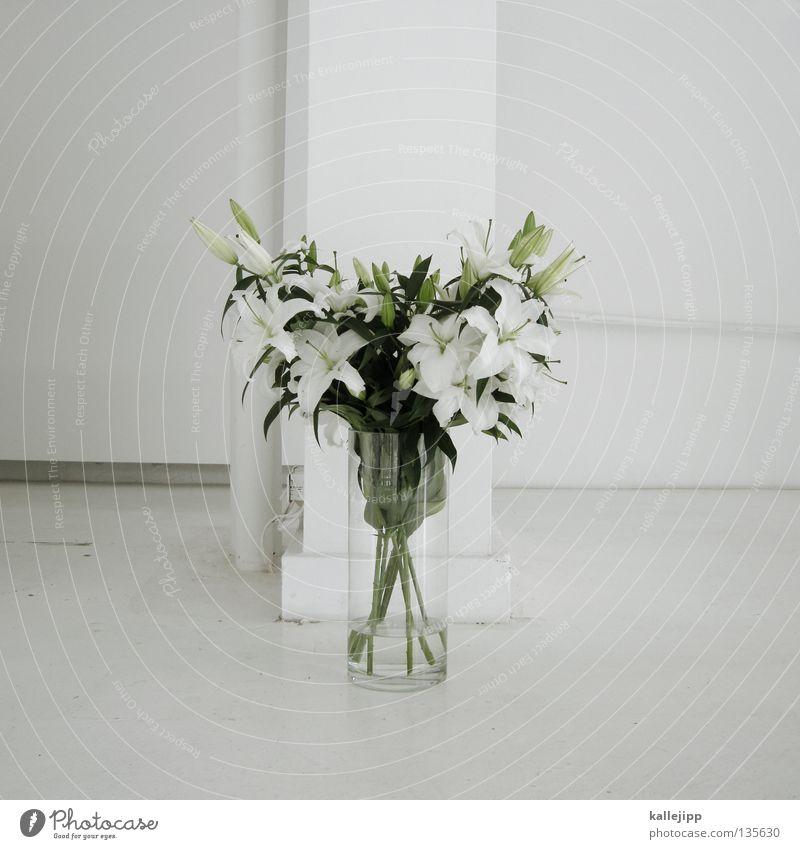 für dich weiß Pflanze Blume Farbe Blüte gold Geburtstag mehrere Erfolg Wachstum Dekoration & Verzierung Romantik Klettern Lebewesen Stengel türkis