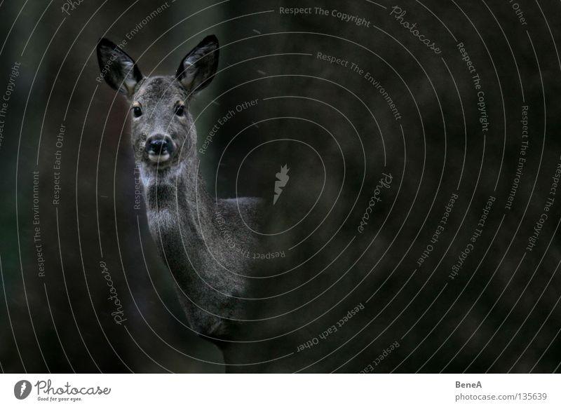 Da schaugst Natur weiß Baum Tier schwarz dunkel Auge grau hell Wildtier frei Ohr verstecken Wachsamkeit Überraschung Säugetier