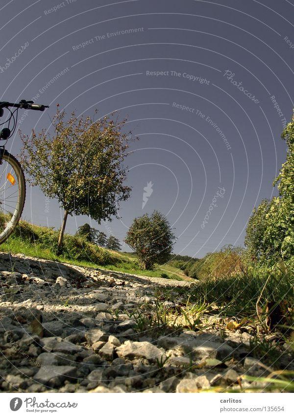 Radtour Sommer Frühling Freizeit & Hobby dumm Karriere Kies aufsteigen Fahrrad Blauer Himmel Mountainbike Wochenende steinig Blume Bildung Lebenslauf Unfallgefahr