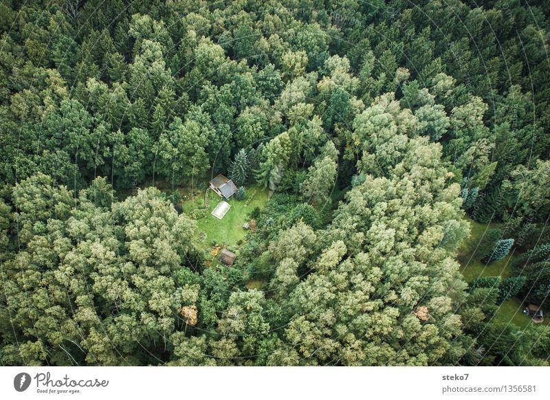Oben Wald Einfamilienhaus Hütte Garten entdecken grün Einsamkeit einzigartig Natur Überleben Versteck Einsiedler Luftaufnahme Menschenleer Textfreiraum links