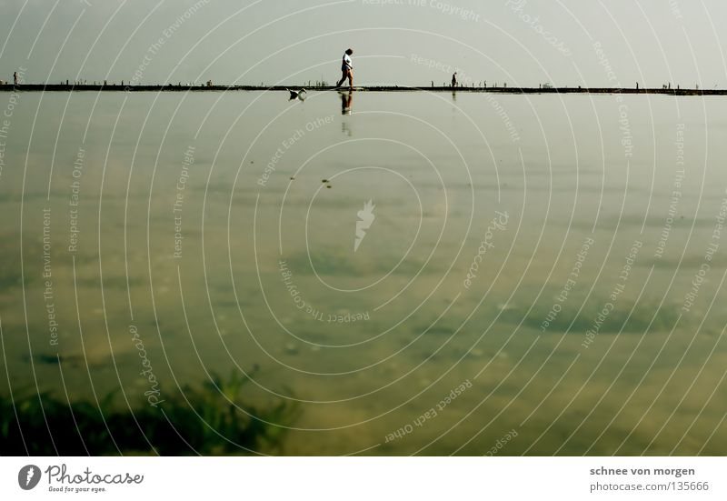wassertreten Mensch Himmel blau Wasser grün Pflanze Meer Strand Sand See Horizont Insel Nordsee Möwe Wattenmeer Flut