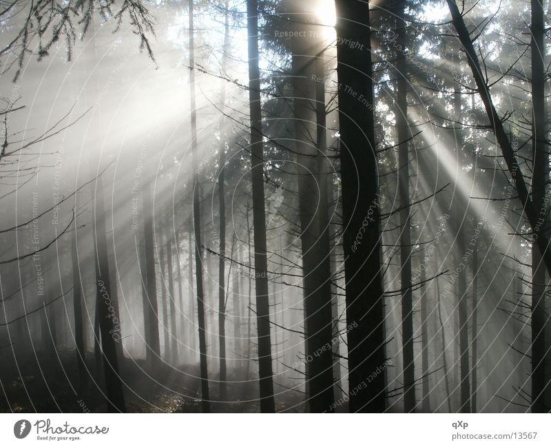 wald im nebel Wald Baum Nebel Schauinsland Herbst Winter Berge u. Gebirge Sonne