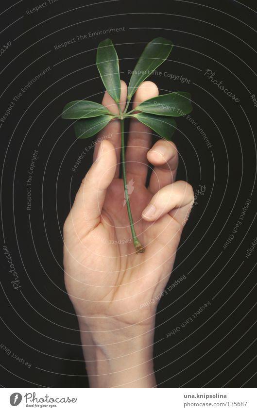 leaf Natur grün Hand Pflanze Gefühle Linie Finger berühren Spuren zart Zärtlichkeiten Intuition Fototechnik Scan Fingerabdruck Scanner