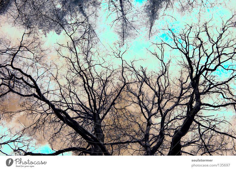 belichtungsfehler... Himmel alt Baum rot Wolken Ferne Freiheit außergewöhnlich Wachstum Spitze Ast Unendlichkeit türkis Surrealismus Überbelichtung Größe