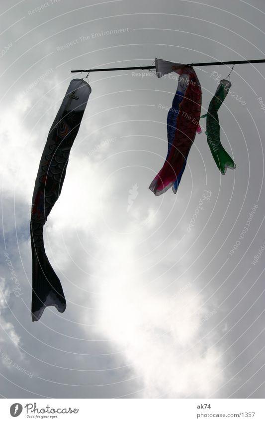 Fliegende Fische Himmel grün rot Wolken Fisch Freizeit & Hobby Drache