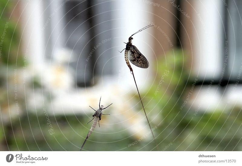 Insekten am Fenster grün Fenster Fliege Flügel Insekt