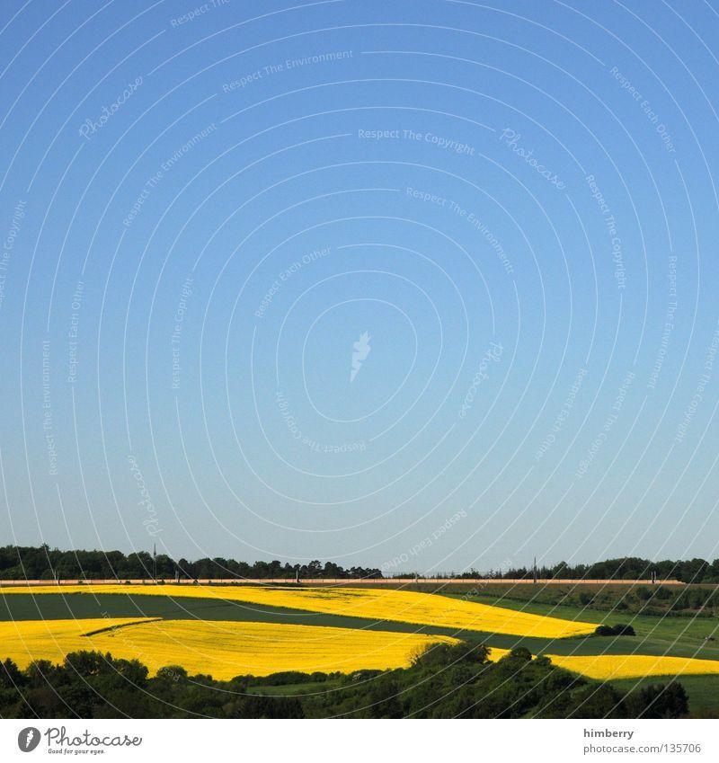 gelbsucht Natur Himmel Baum Pflanze Sommer Ferien & Urlaub & Reisen gelb Wald Blüte Landschaft Feld groß Horizont Eisenbahn fahren Aussicht