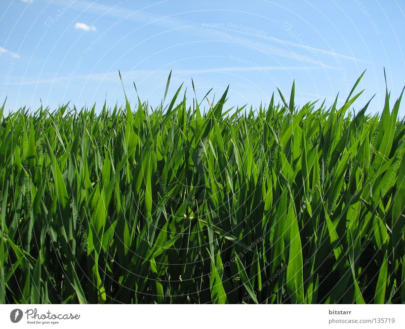 käfersicht Himmel grün blau Sommer Wolken Wiese Gras Zufriedenheit Graffiti Feld wandern Schönes Wetter Sachsen