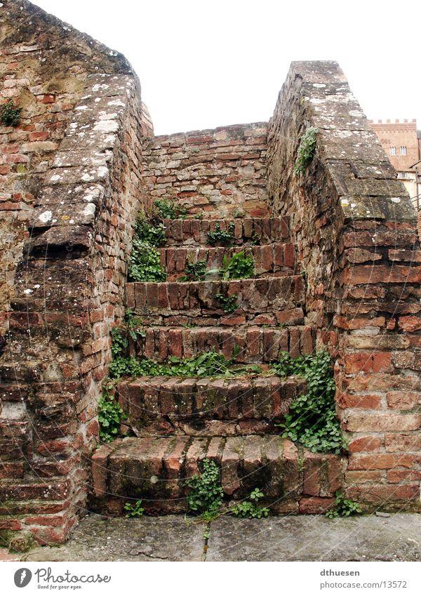 Steintreppe in Sienna (Italien) Backstein rot bewachsen verfallen Gemäuer Architektur Treppe alt Wirldwuchs Siena Einsamkeit