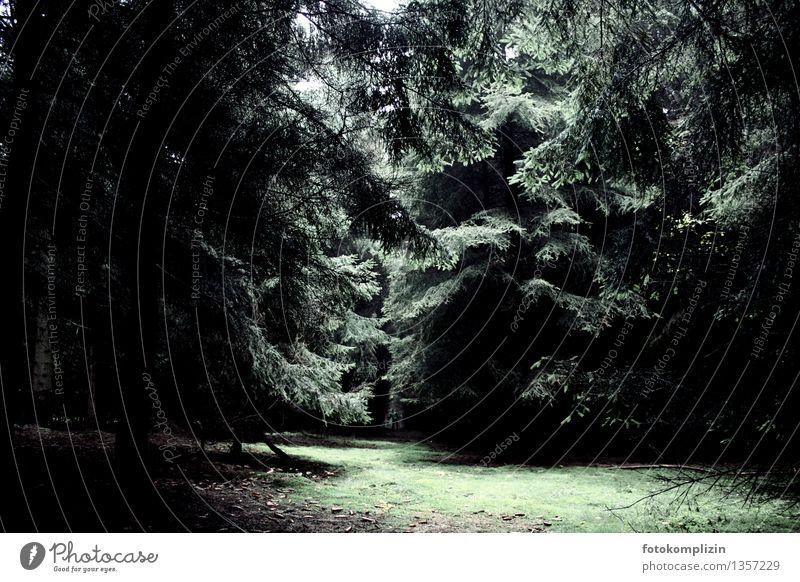 wald platz Natur Baum Einsamkeit Landschaft ruhig dunkel Wald kalt Umwelt Gras Stimmung träumen Schutz geheimnisvoll dünn Umweltschutz