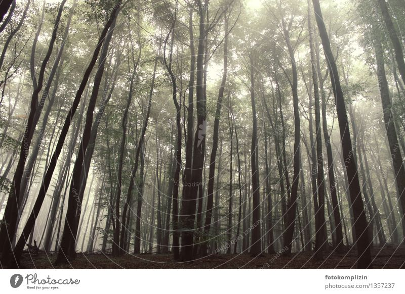 waldgradbäume Natur Pflanze Baum Einsamkeit ruhig dunkel Wald kalt Umwelt grau Wachstum leuchten stehen groß hoch Klima
