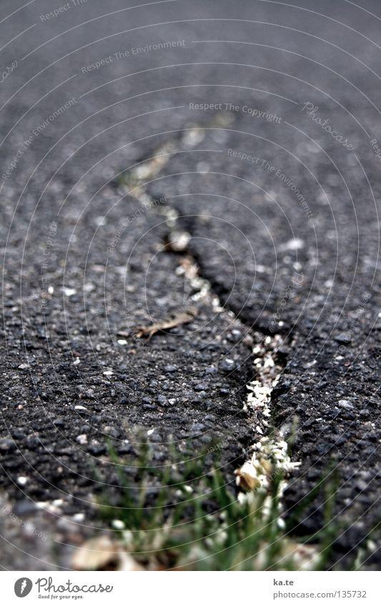 Aufbruch Teer Asphalt kaputt Riss schwarz grau Gras Straßenrand Bordsteinkante Furche Straßenbau Baustelle Grenze tief Vergänglichkeit Durchbruch Neuanfang