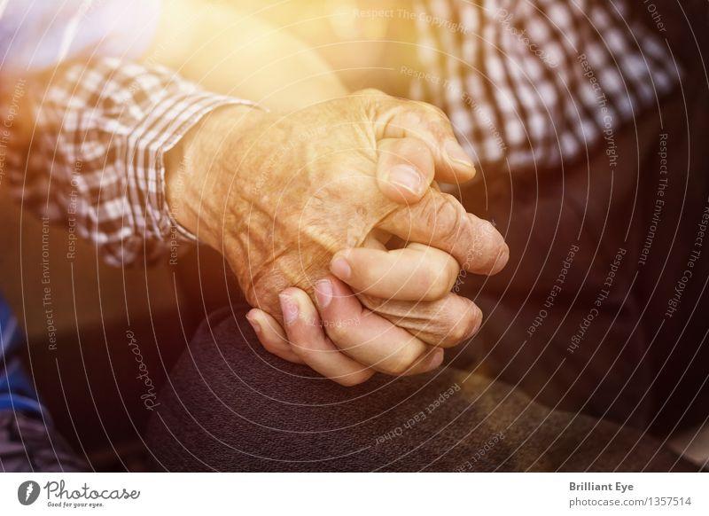 Gemeinsam Sommer Mensch Junge Familie & Verwandtschaft Senior Leben Hand Finger 2 Natur Sonne Sonnenlicht Frühling alt berühren Liebe Gefühle Mitgefühl Güte
