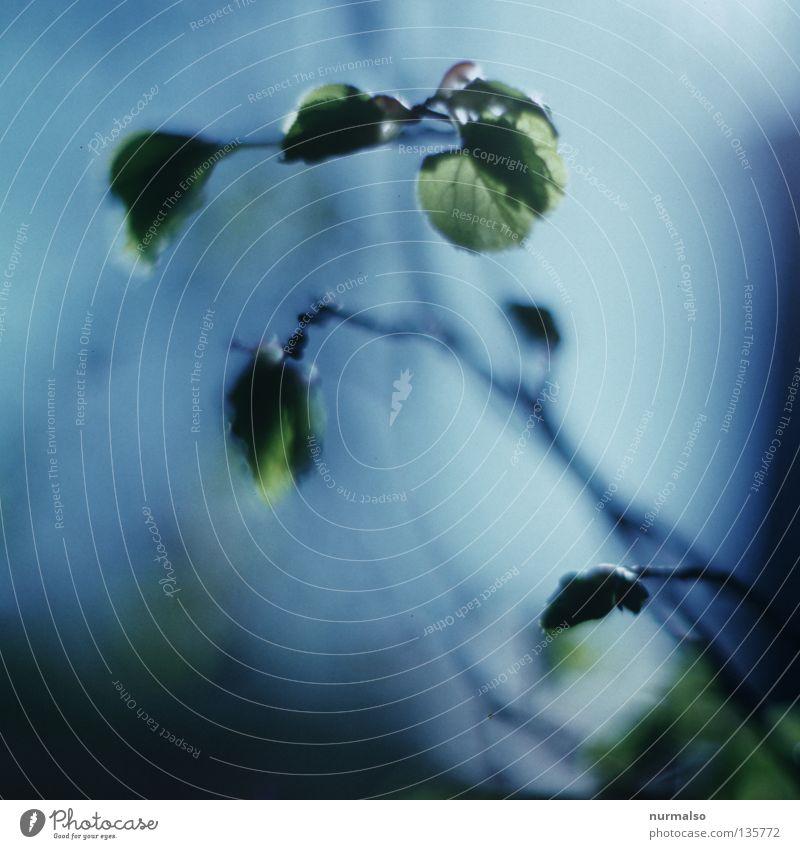 Morgenzärtlichkeit Himmel Natur blau grün schön Baum Blatt Gefühle Frühling träumen Stimmung frei frisch Sträucher Ast weich