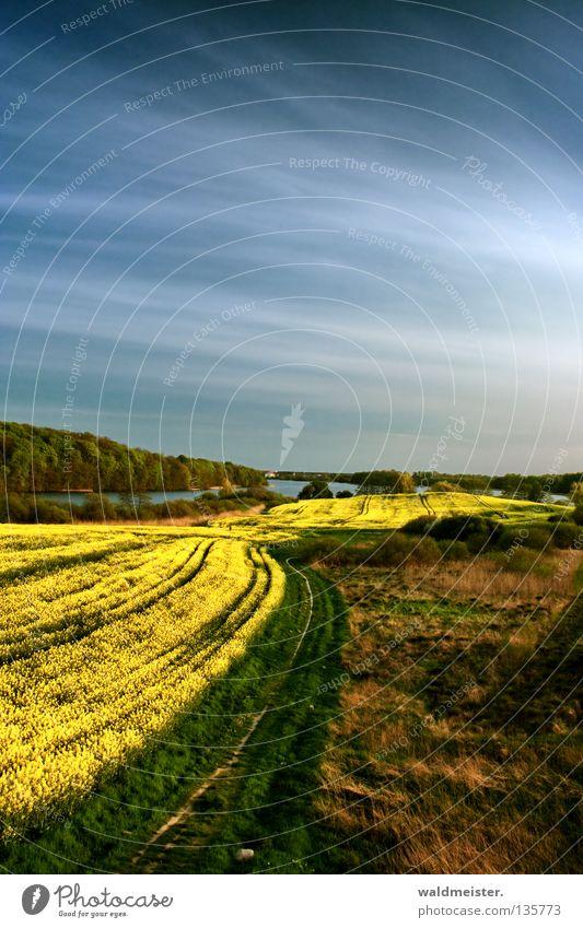 World of Rapscraft Natur Himmel Sommer Wolken Wiese Wege & Pfade See Landschaft Feld Gemälde Raps Landschaftsformen Mecklenburg-Vorpommern Öl Biokraftstoff Biodiesel