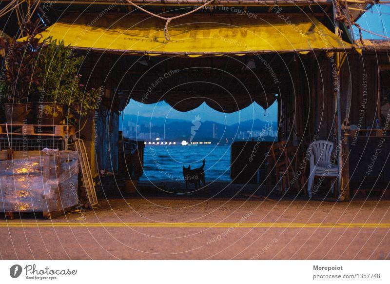 Hund Sommer Küste Flussufer Hongkong China Stadt Tier Haustier Wildtier 1 Farbe Anlegestelle Liegeplatz Farbfoto Außenaufnahme Menschenleer Textfreiraum Mitte