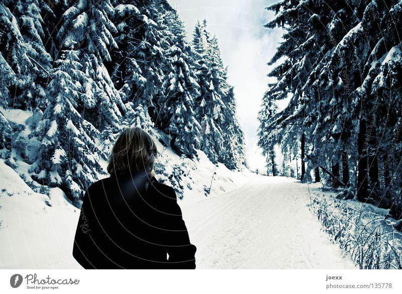 Lebenslauf abgelegen Angst Atem losgehen Wolken laufen dunkel Einsamkeit Frau Denken kalt Loipe Nadelwald Philosophie ruhig Ende Spaziergang Tanne verloren Wald