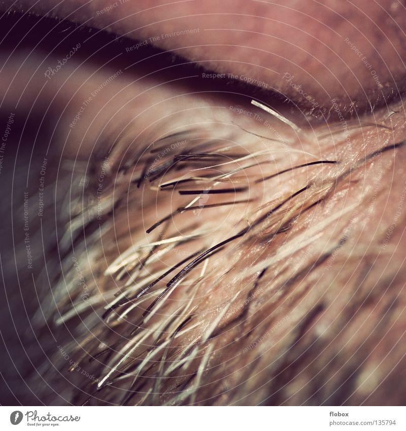 Body Parts V Nasenhaar Geruch Nasenloch Nasenspitze Nasenmuscheln Schleimhaut Luft Atem atmen Bart Oberlippenbart Barthaare rau Organ Unschärfe weich hart schön