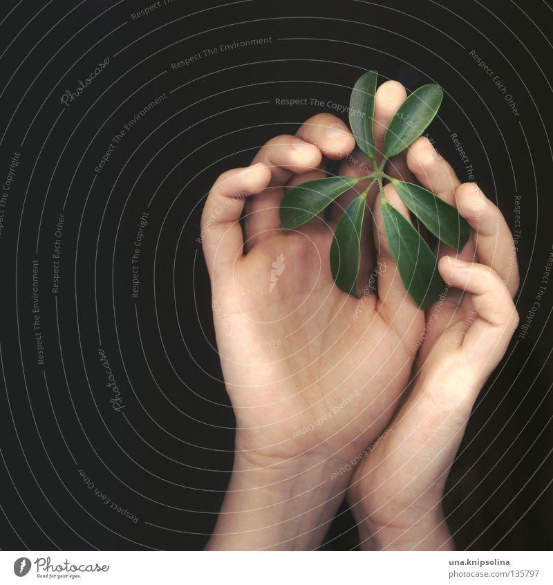.leaf Natur grün Hand Pflanze Gefühle Linie Finger berühren Spuren zart Zärtlichkeiten Intuition Fototechnik Scan Fingerabdruck Scanner