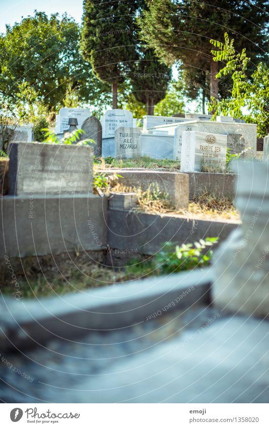 Istanbul Umwelt Sehenswürdigkeit Friedhof Grab Grabmal Grabstein grün Farbfoto Außenaufnahme Menschenleer Tag Schwache Tiefenschärfe